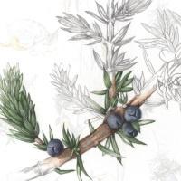 Nicht schnacken - Freunde packen: Celtic Gin Tasting