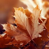 WhiskyWalk Herbstspaziergang